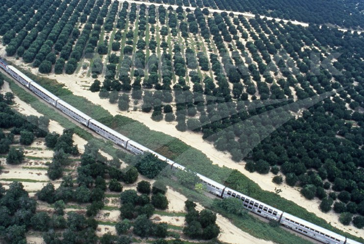 <i>Sunset Limited</i> near Sebring, Fla.
