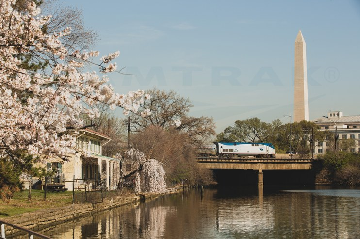 Train among the cherry blossoms, 2014.